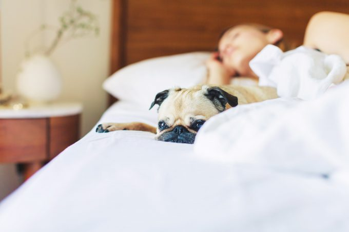 dog sleeping with woman in bed